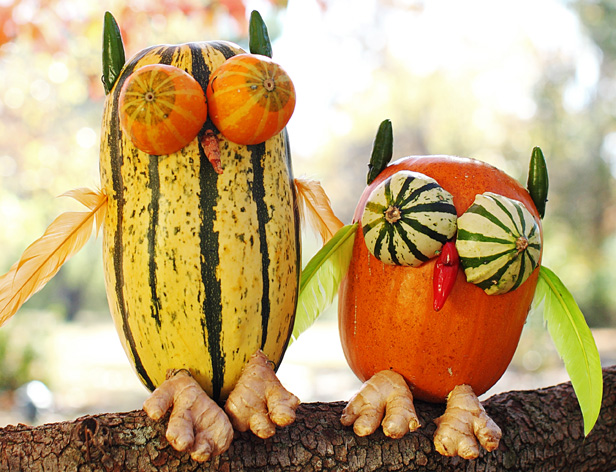 pumpkin carving ideas owls